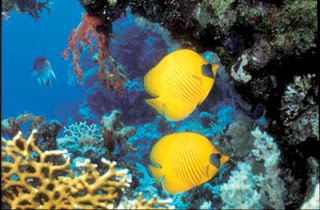 Diving in Hurghada 2.jpg