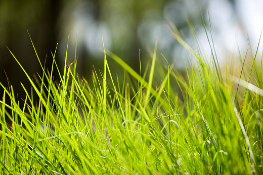 Grass Close Up _ SM.png