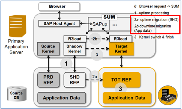 phases behind dmo r3load parallel export import during uptime and
