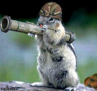 war_squirrel.JPG