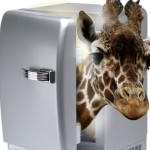 Giraffe-in-a-fridge-150x150.jpg